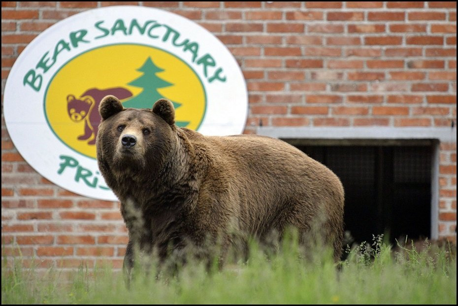 Santuario degli orsi a Prishtina in Kosovo