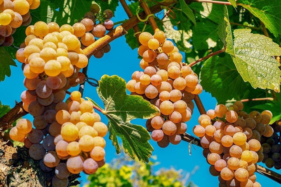 agricoltura albania